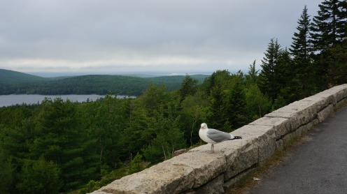 A friend I met in Acadia. Look at the beautiful trees!